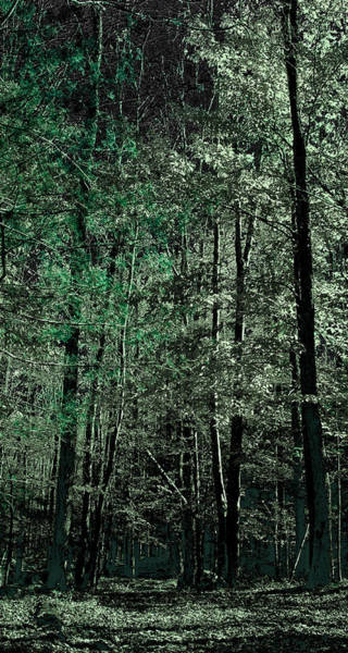 Photograph - Forest Green by David Patterson