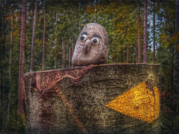 Zuerich Wall Art - Photograph - Forest Guardian by Hanny Heim