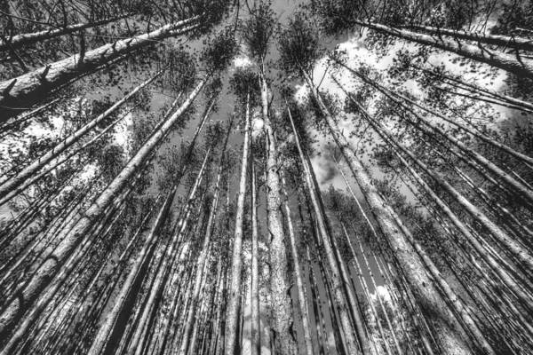Photograph - Forest Guards by Dawn J Benko