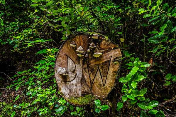 Photograph - Forest Hieroglyphics by Roxy Hurtubise