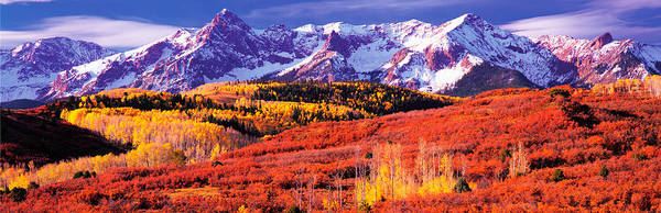 Telluride Photograph - Forest In Autumn With Snow Covered by Panoramic Images