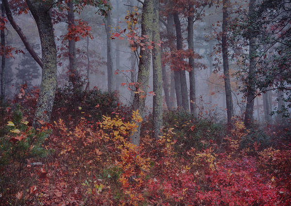 Forest In Fog Art Print