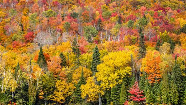 Plein Air Photograph - Forest In Peak Autumn Colors by Pierre Leclerc Photography