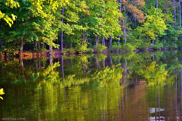Conyers Photograph - Forest In Reflection by Tara Potts