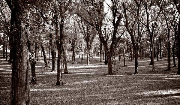 Photograph - Forest In Sepia by Ricardo J Ruiz de Porras