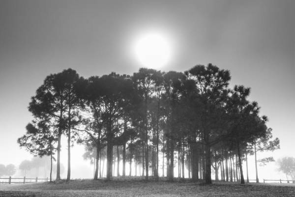 Okeeheelee Park Photograph - Forest In The Fog by Debra and Dave Vanderlaan