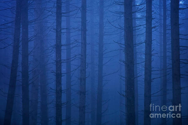 Photograph - Forest In The Fog by Sean Bagshaw