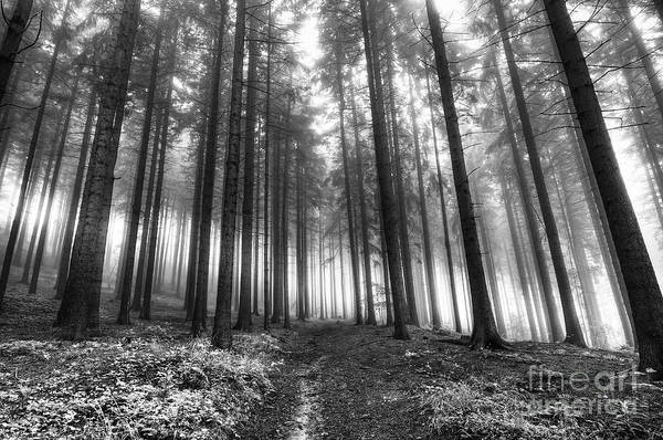 Wall Art - Photograph - Forest In The Mist by Michal Boubin
