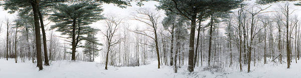 Peacefulness Photograph - Forest In Winter, Quebec, Canada by Panoramic Images