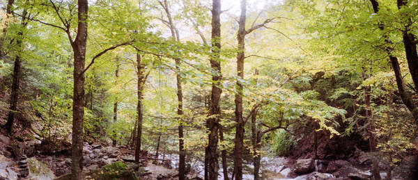 Catskill Photograph - Forest, Kaaterskill Falls, Catskill by Panoramic Images