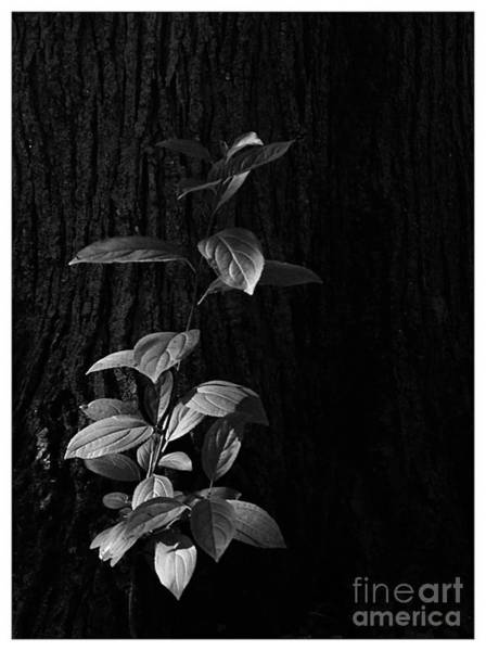 Photograph - Forest Light by Frank J Casella