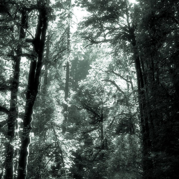 Photograph - Forest Light by Lora R Fisher