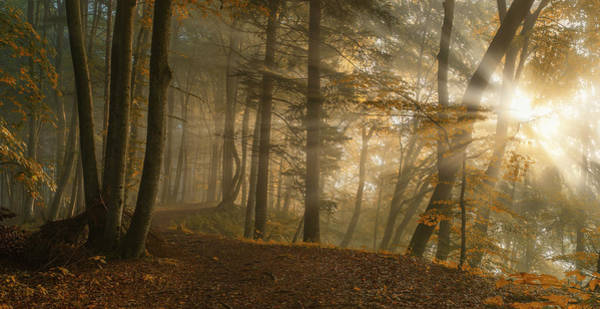Sunbeam Photograph - Forest Light by Norbert Maier