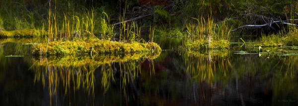 Photograph - 131005b-044 Forest Marsh 1 by Albert Seger