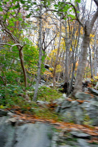 Monocacy Wall Art - Photograph - Forest Meet Trees by Bess Yearsley