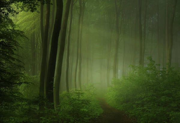 Morning Photograph - Forest Morning by Norbert Maier