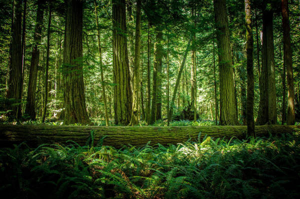 Photograph - Forest Of Cathedral Grove Collection 7 by Roxy Hurtubise