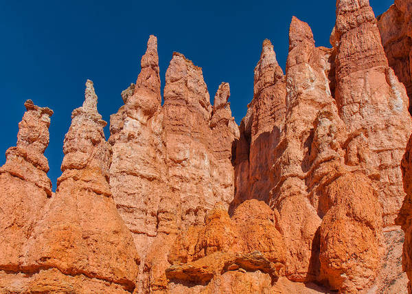 Photograph - Forest Of Red Pinnacles by John M Bailey