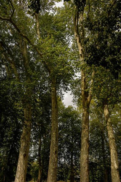 Fisher Center Photograph - Forest by Oleg Koryagin