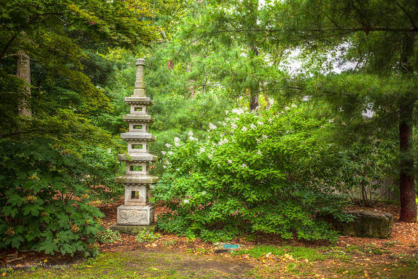 Photograph - Forest Pagoda by Ross Henton