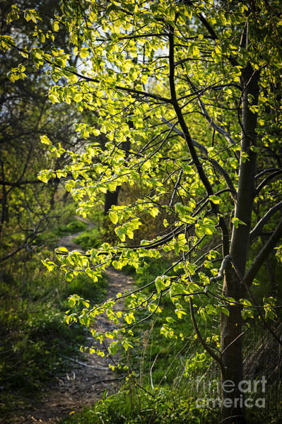Wall Art - Photograph - Forest Path by Elena Elisseeva