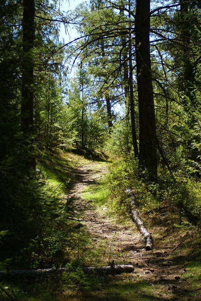 Photograph - Forest Path In Spokane 2014 by Ben Upham III