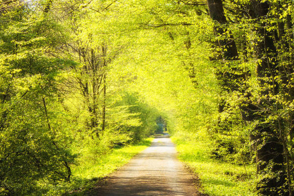 Photograph - Forest Path In Spring With Bright Green Trees by Matthias Hauser