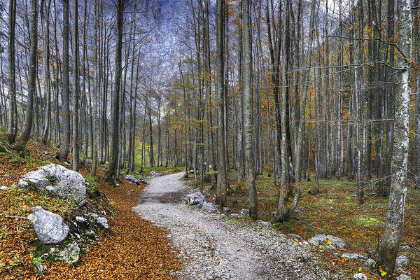 Photograph - Forest Path by Ivan Slosar