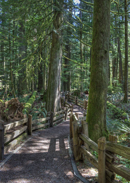 Photograph - Forest Path by Randy Hall