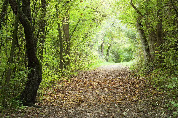 Natural Phenomenon Photograph - Forest Path With Fallen Leaves Towards by Agenturfotograf