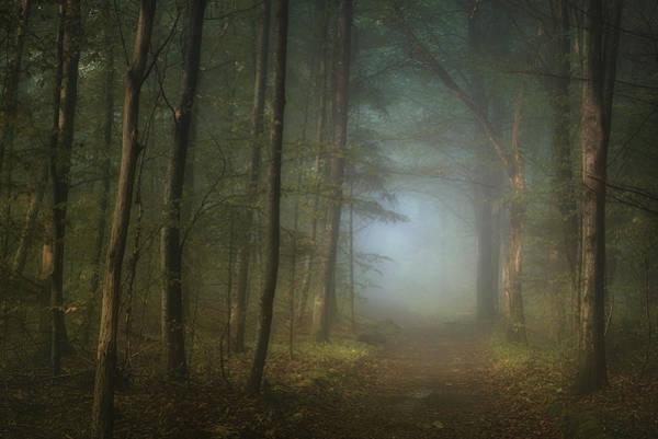 Haze Wall Art - Photograph - Forest Pathway by Norbert Maier