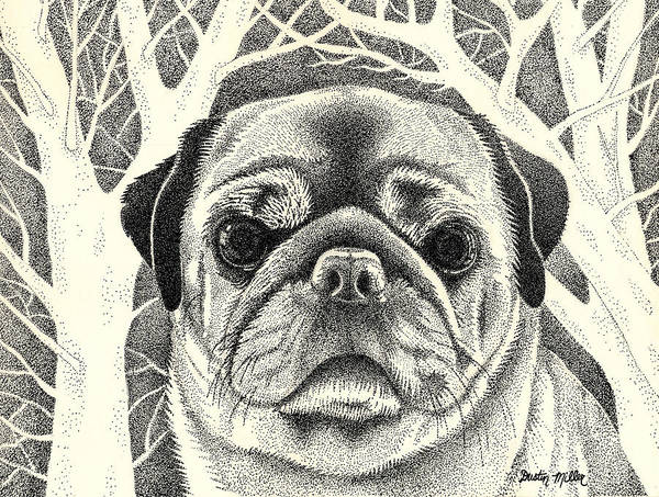 Drawing - Forest Pug by Dustin Miller