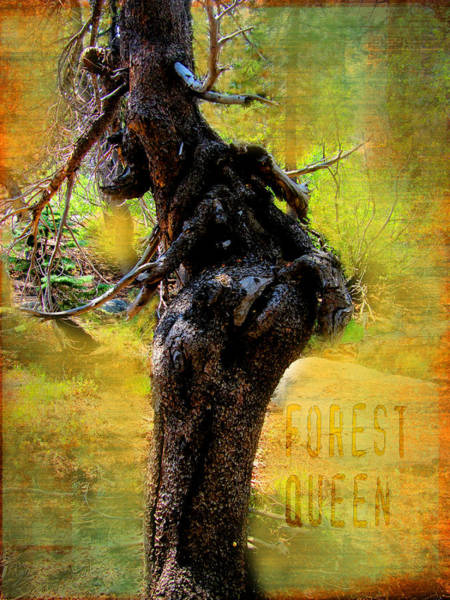 Wall Art - Digital Art - Forest Queen by Barbara Bitner