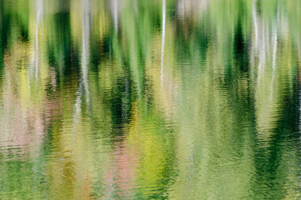 Photograph - Forest Reflection by Rob Huntley