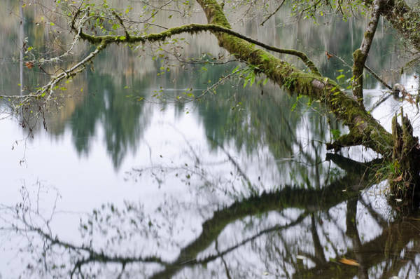 Photograph - Forest Reflections by Margaret Pitcher