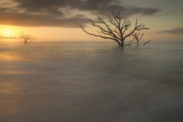 Photograph - Forest Requiem by Doug McPherson