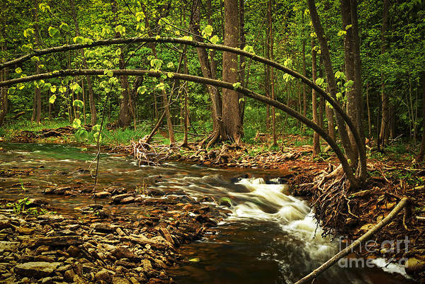Wall Art - Photograph - Forest River by Elena Elisseeva