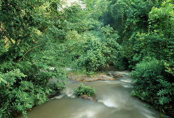Ghana Wall Art - Photograph - Forest River Rapids by Sinclair Stammers/science Photo Library