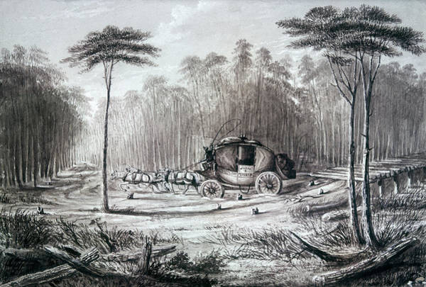 Drawing - Forest Road, 1836 by Granger