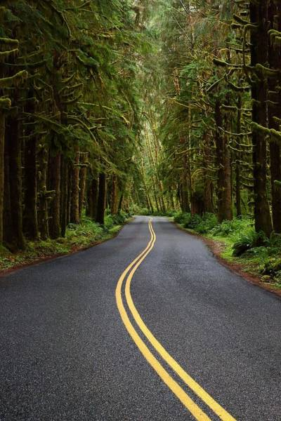 Photograph - Forest Road by David Andersen