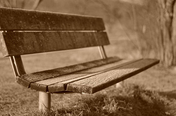 Photograph - Forest Seating by Miguel Winterpacht