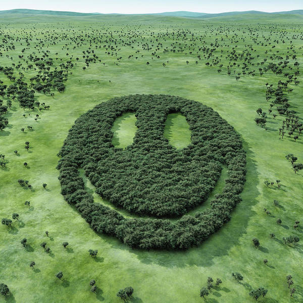 Smiley Face Wall Art - Photograph - Forest Shaped Smiley by Hiroshi Watanabe