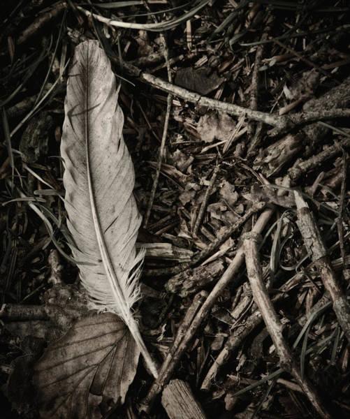 Wall Art - Photograph - Forest Still Life by Odd Jeppesen