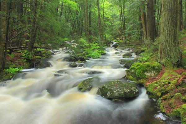 Rutland Photograph - Forest Stream After Spring Rain by John Burk