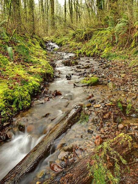 Photograph - Forest Stream II by HW Kateley