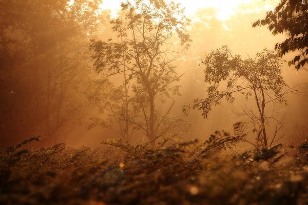 Photograph - Forest Sunrise 2 by Scott Hovind