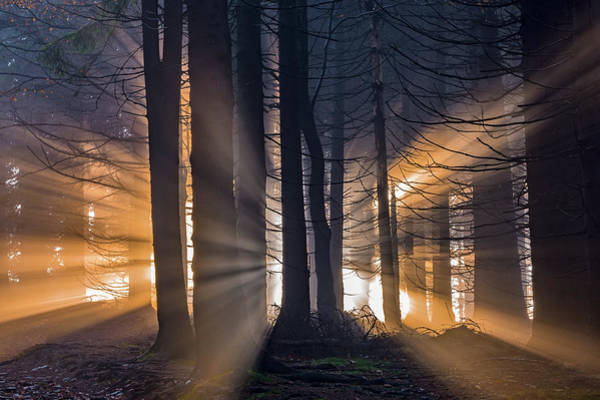 Bright Photograph - Forest by Tom Pavlasek