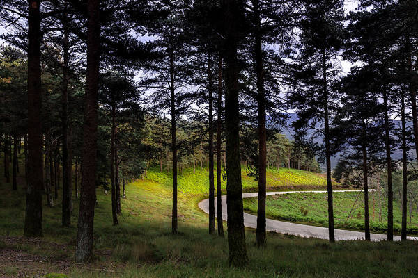 Photograph - Forest Trail by Edgar Laureano
