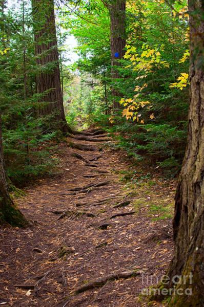 Photograph - Forest Trail by Les Palenik
