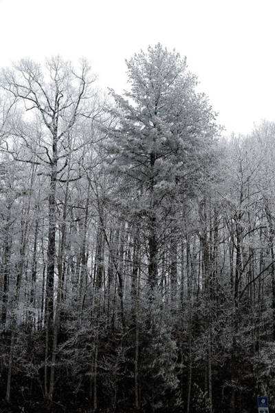 Photograph - Forest With Freezing Fog by Daniel Reed